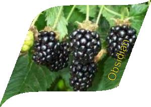 ობსიდიან (10 ცალი)