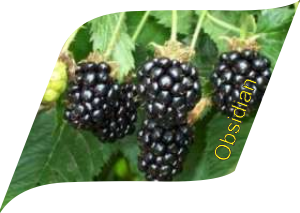Обсидиан (10 штук)