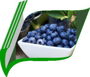 Fresh&Frozen blueberry